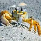 Crab at palm island by Anthony Goldman