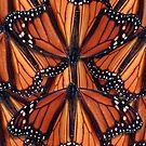 Monarchfalter Art von Irisangel