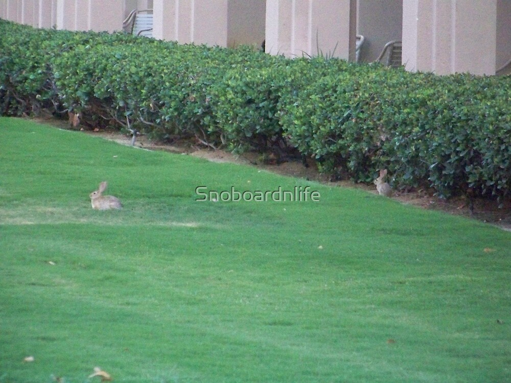 Jack and Jane Rabbitz by Snoboardnlife