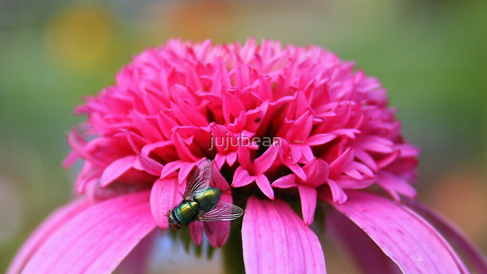Green Fly on a Coneflower by jujubean