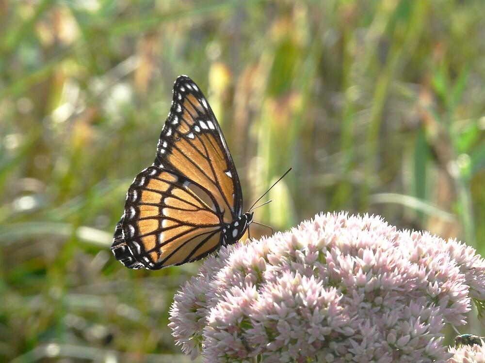 Monarch by rasnidreamer