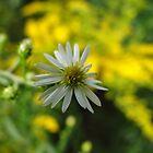 Last little summer flower by vigor