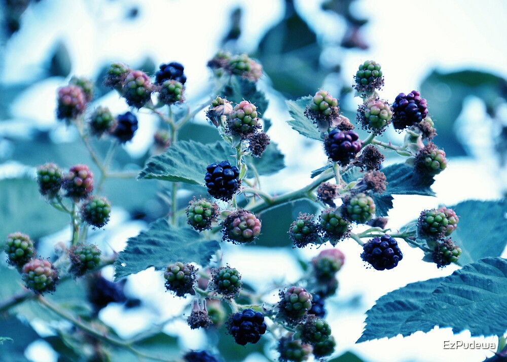 The Taste of Summer - Part I by EzPudewa