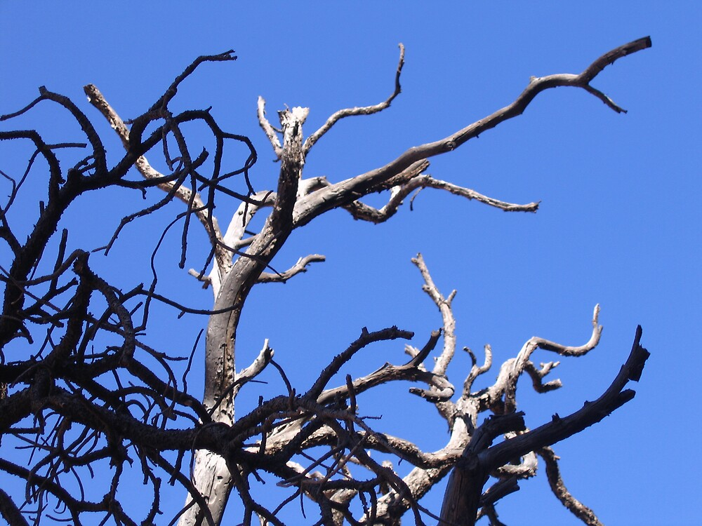 Arches - Branches by Luke Brannon