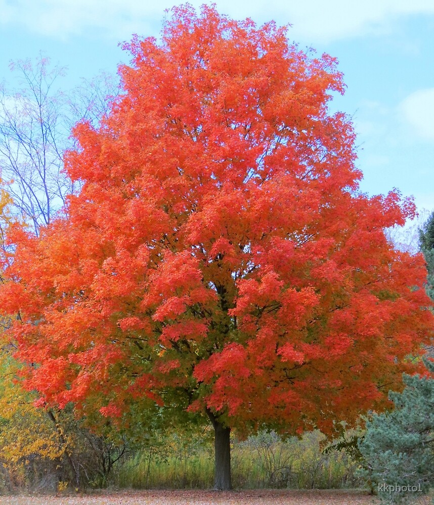 An Autumn Beauty by kkphoto1