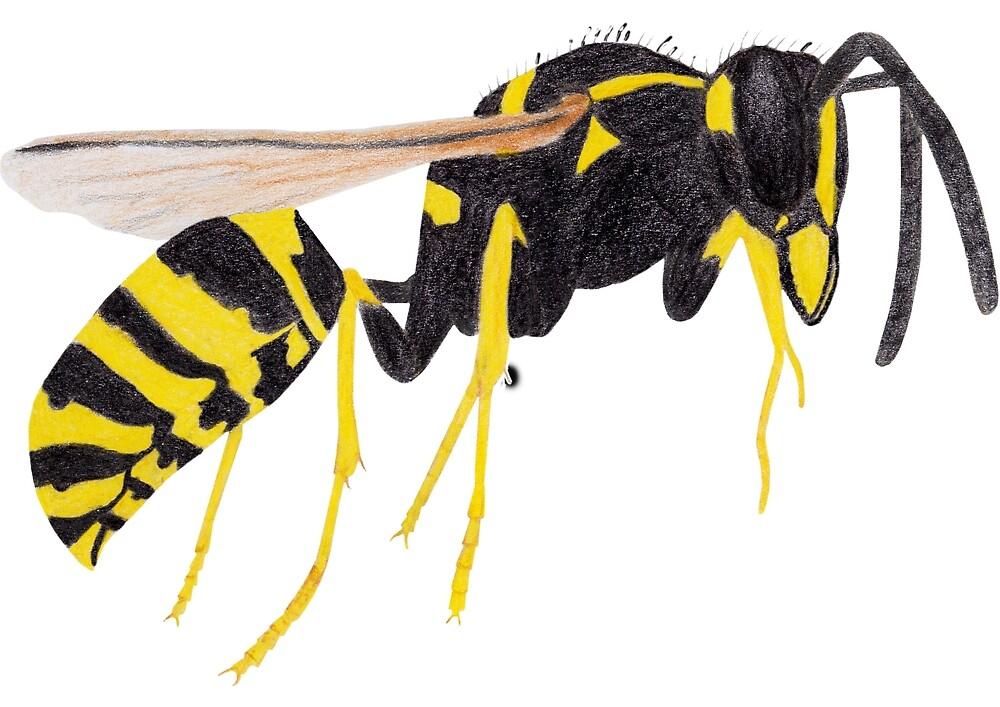 Paper Wasp by Linda Ursin