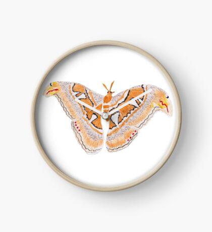 Atlas Moth Clock