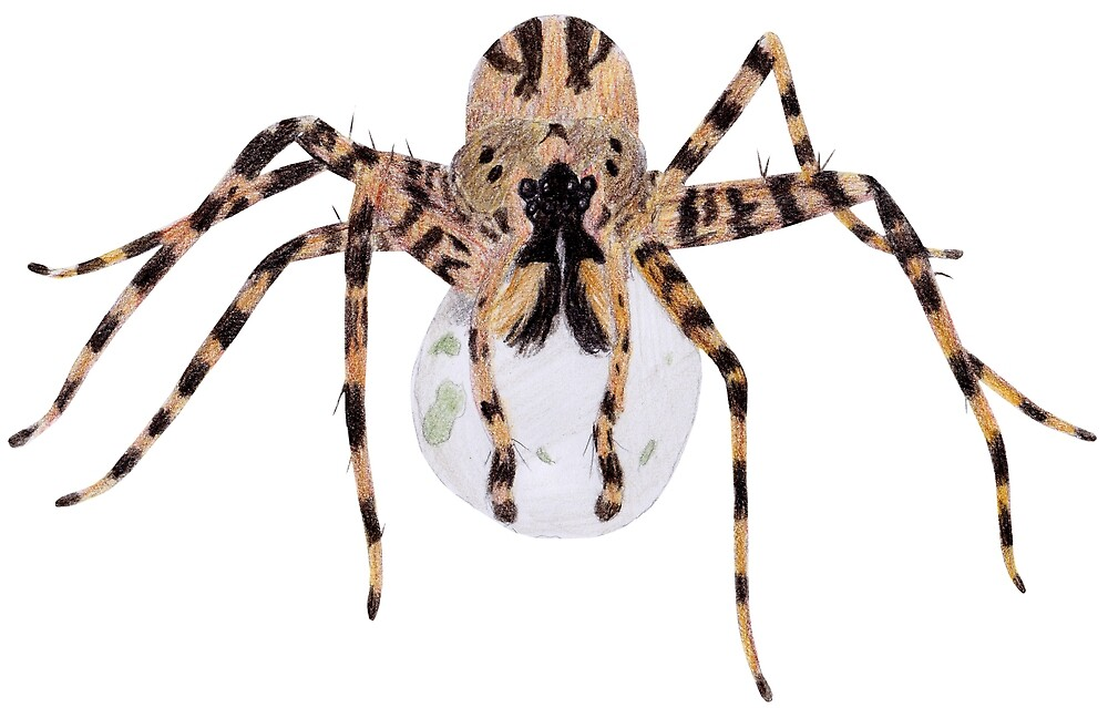 Spider with an Egg Sack by Linda Ursin