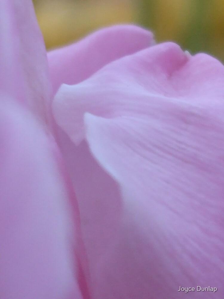 Pink Petals by Joyce Dunlap