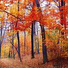 Woodland Passage by Jessica Jenney