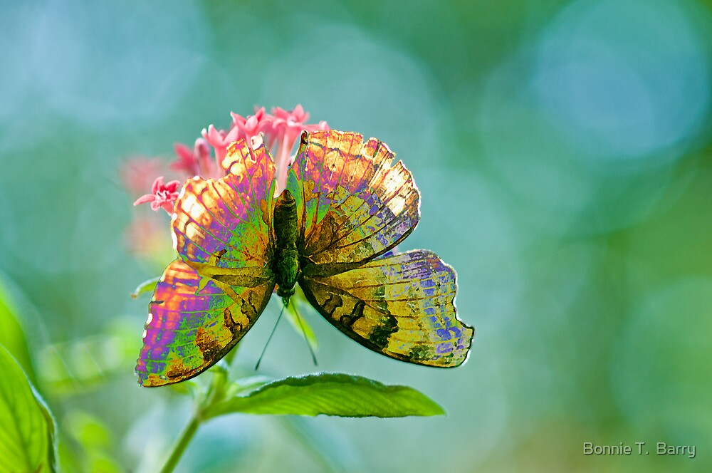 Butterfly Magic by Bonnie T.  Barry