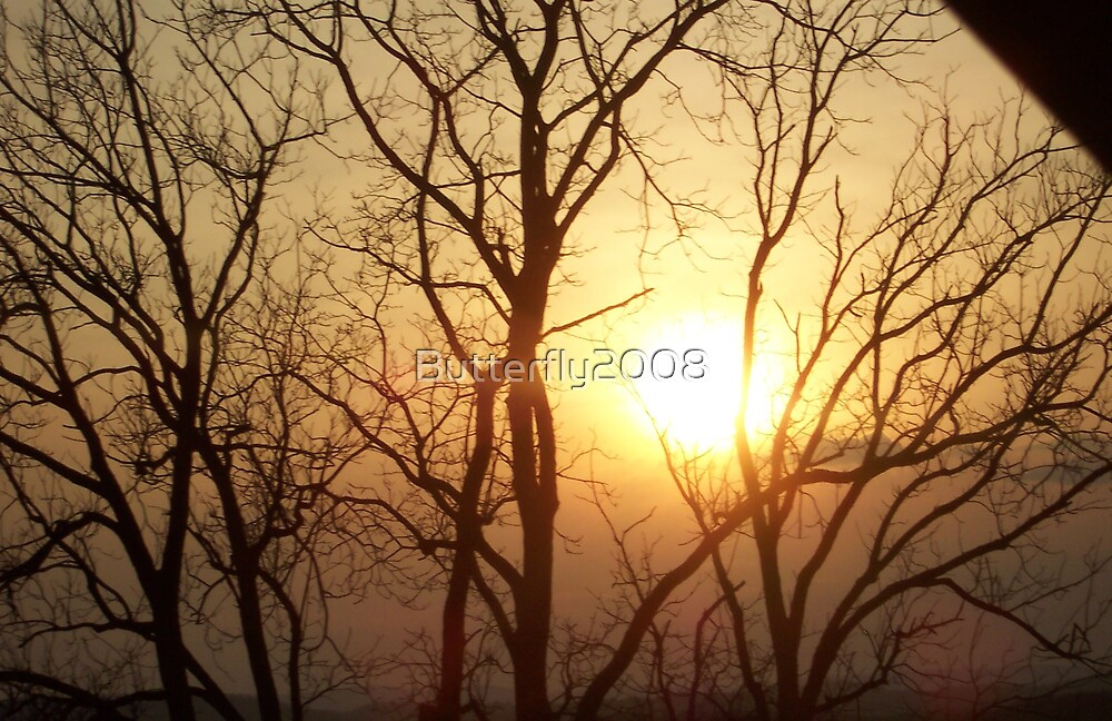 Sun setting Trees by Butterfly2008