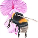 a bee on a pink flower by cathyscreations