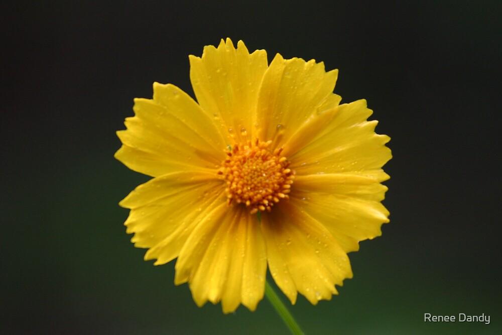 Yellow Flower by Renee Dandy