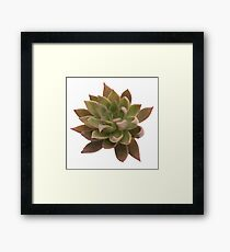 Realistic Succulent Watercolor Painting, Cactus/ Succulent Art Framed Print