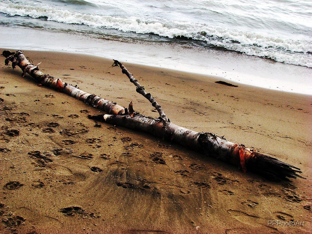 Driftwood by PPPhotoArt