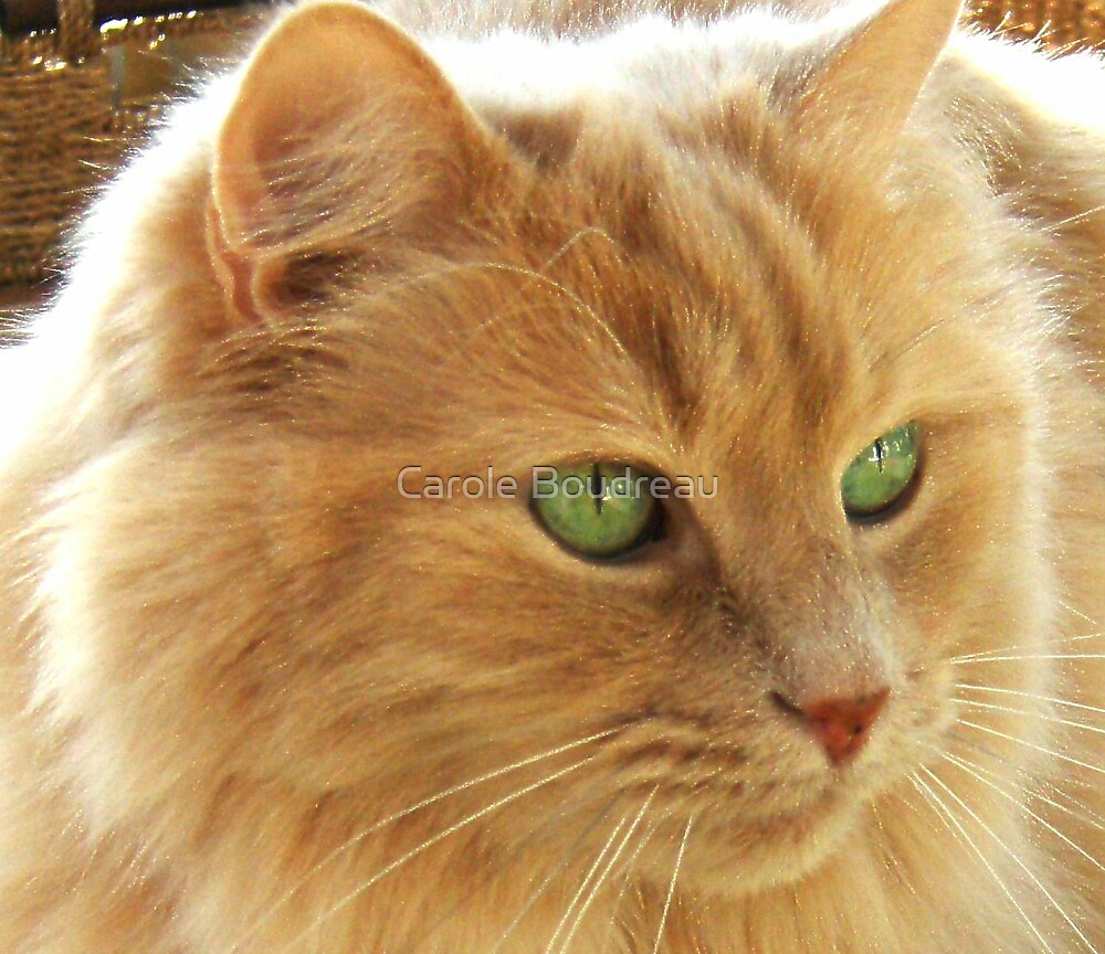 These eyes make me flip, if only... by Carole Boudreau