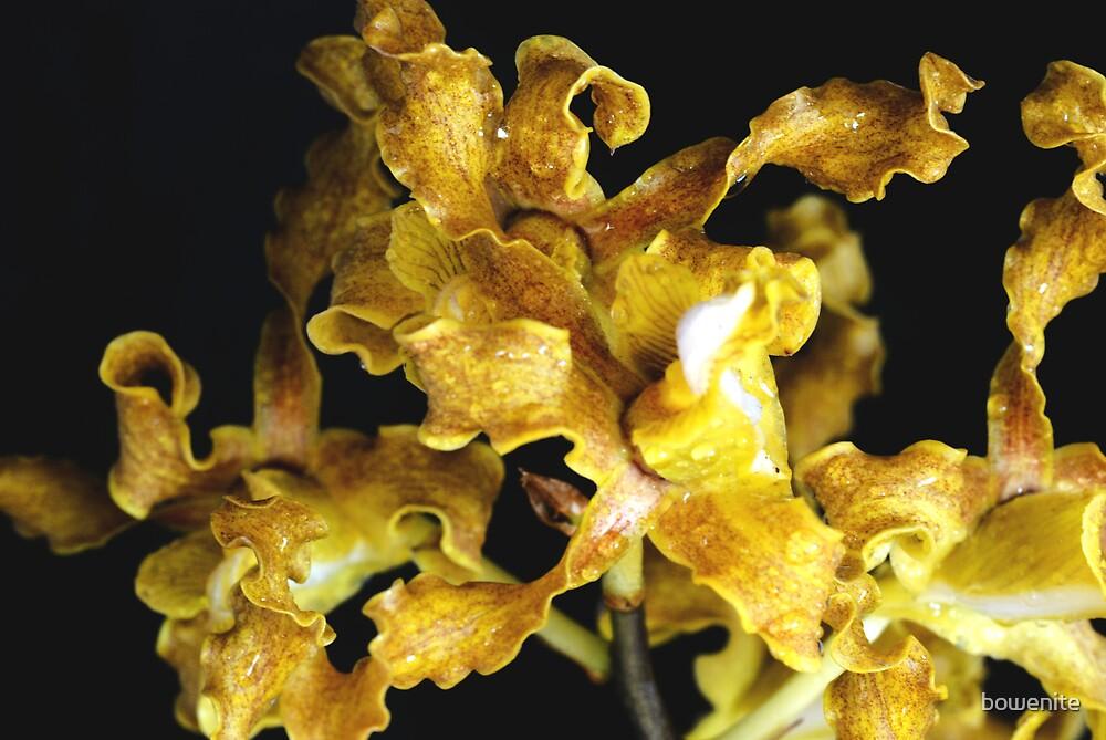 """Bush Orchids"" by bowenite"