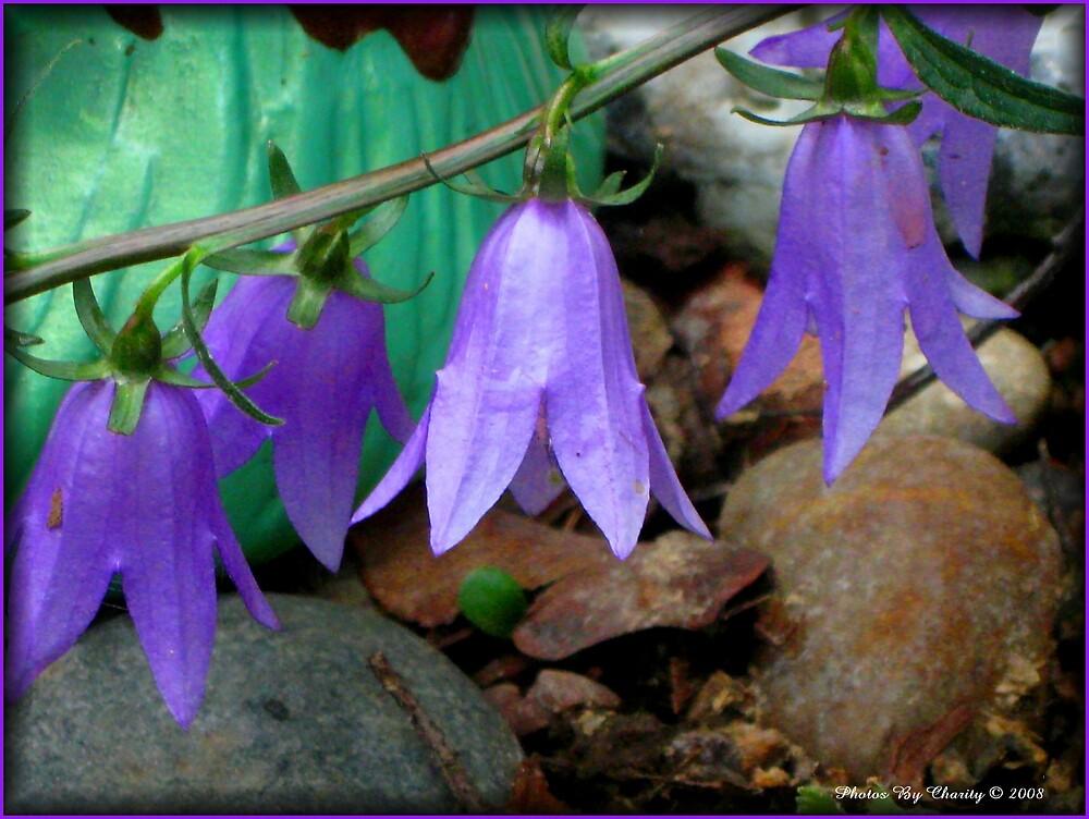Beautiful flowers by MamaCharity