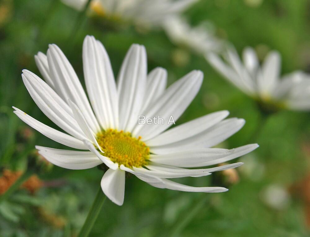 Daisy by Beth A