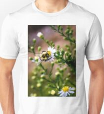 Bumble Bee On a Daisy T-Shirt