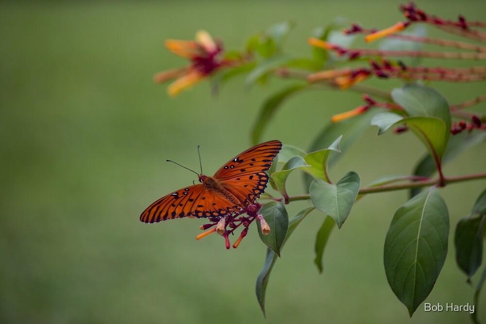 Butterfly by Bob Hardy