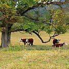Delegate River Farm by helmutk