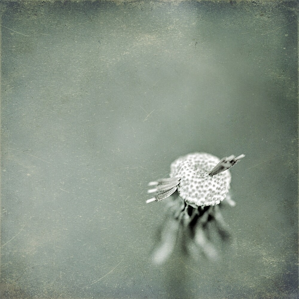 Wishful Thinking by Trish Mistric
