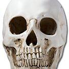 Skull by Keith G. Hawley