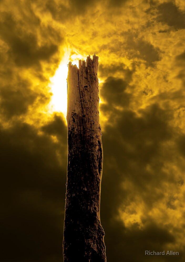 Tree Stump by Lea Valley Photographic