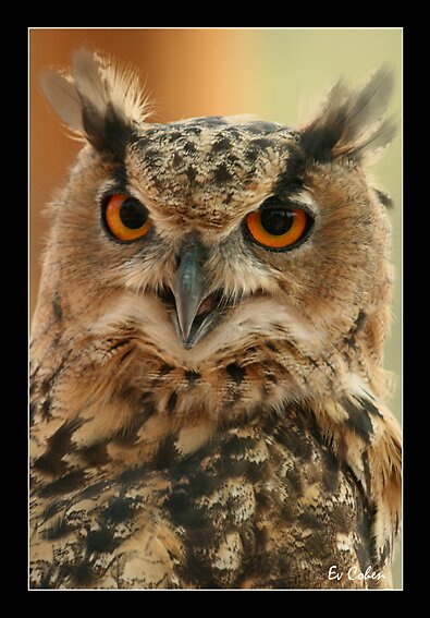 Eagle Owl by EvCohen