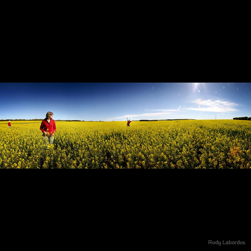 Yellow Carpet by Rudy Labordus
