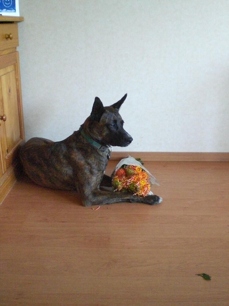 flowerdog by boap