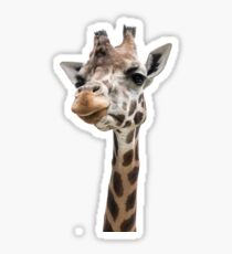 Close-up of a gorgeous giraffe face Sticker