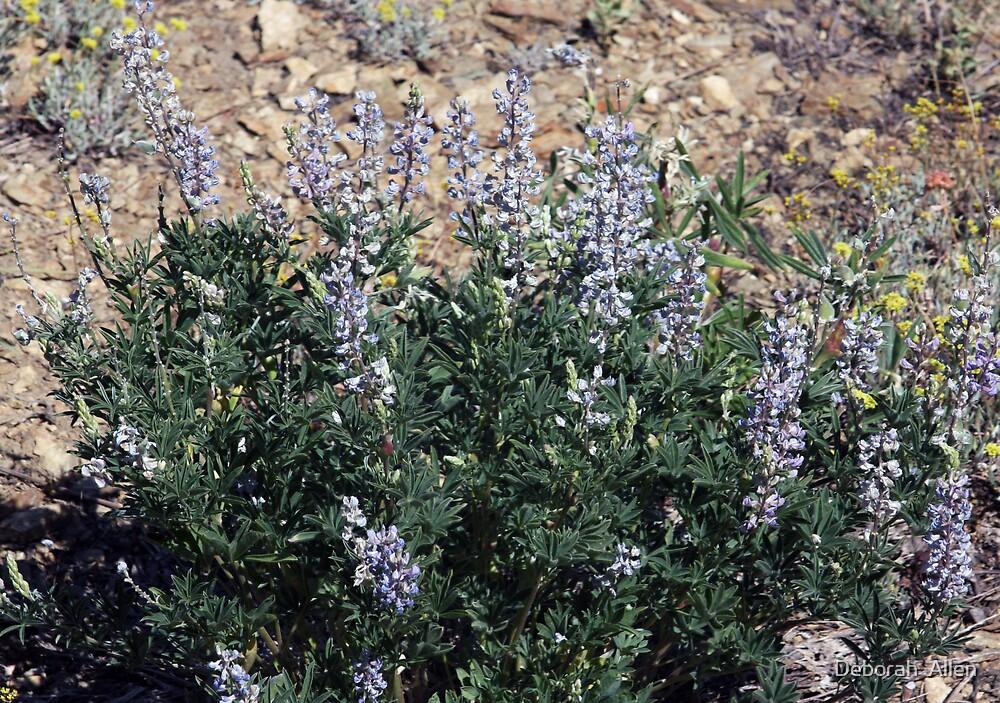 Blue Wildflowers by Deborah  Allen