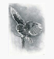 Great Grey Photographic Print