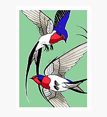 Swallows on green background Photographic Print