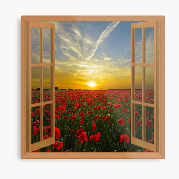 Red Poppies landscape window view Metal Print