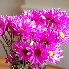 Pink Daisies! by Lauren01
