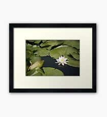 Beautiful white waterlily in the Danube Delta, Romania, on summer day Framed Print