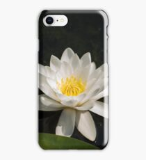 Beautiful white waterlily in the Danube Delta, Romania, on summer day iPhone Case/Skin
