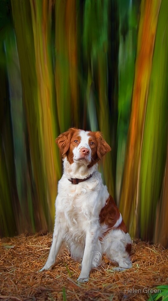 Beautiful Brittany by Dog Shop