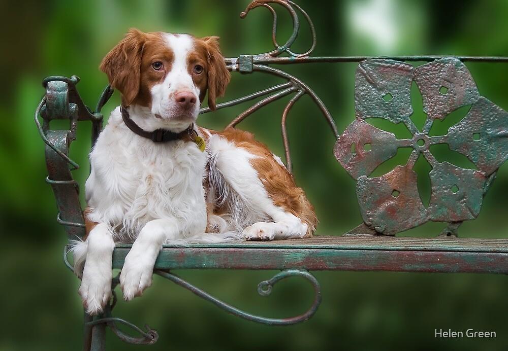 Take A Seat by Dog Shop