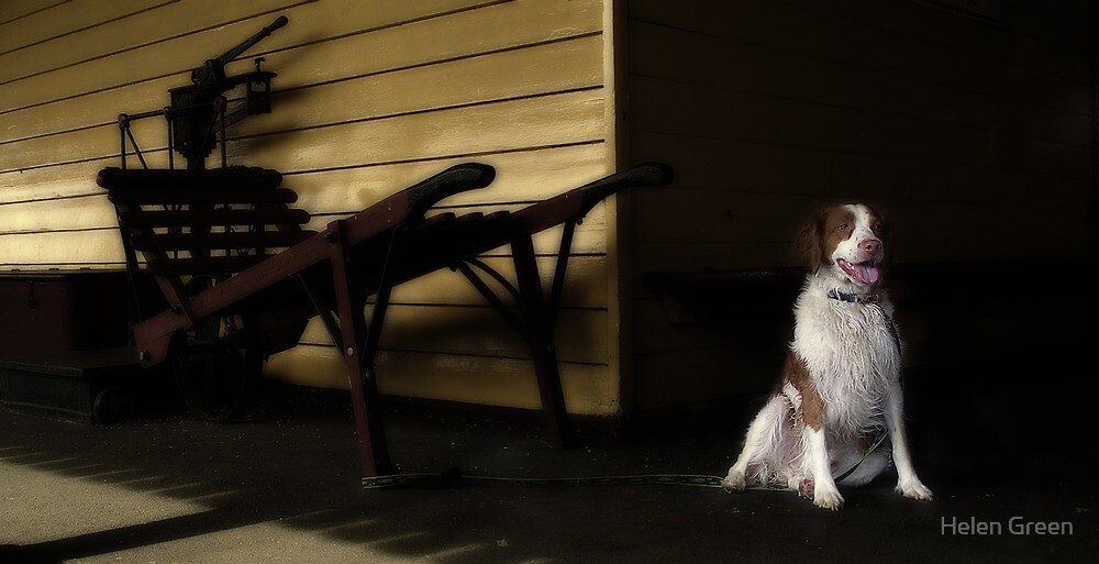 Waiting In The Shadows by Dog Shop