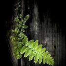 « Green Power » par Philippe Sainte-Laudy