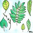 Little Leaves by kroksg