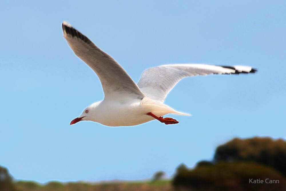 Flying Gull by Katie cann