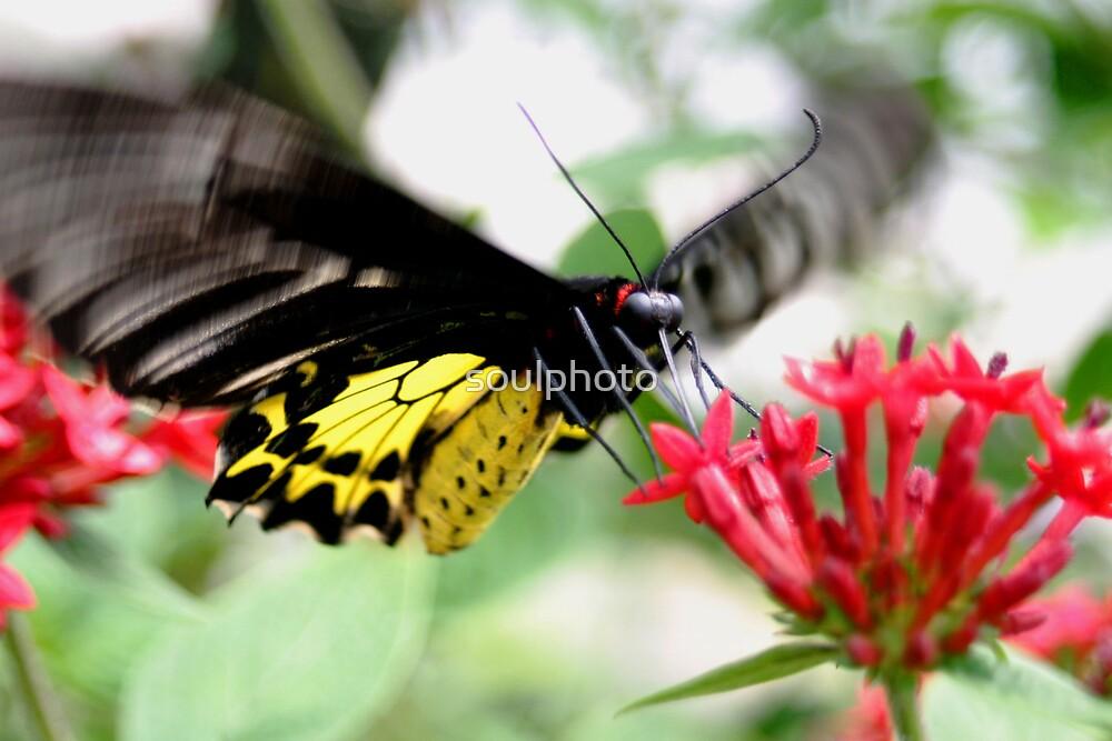 Butterfly Land by soulphoto