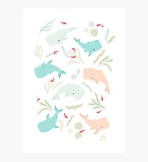 Pastel Whale Pattern Photographic Print