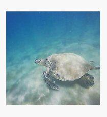 Hawaiian Sea Turtle Photographic Print